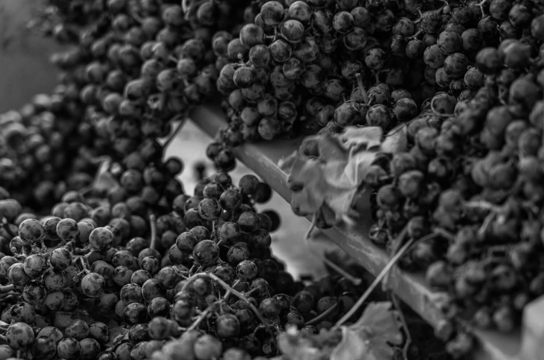 Navitas Winery corporate website, product catalog Lab21 web development